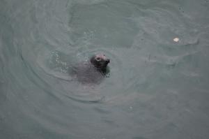 ¡Las focas!